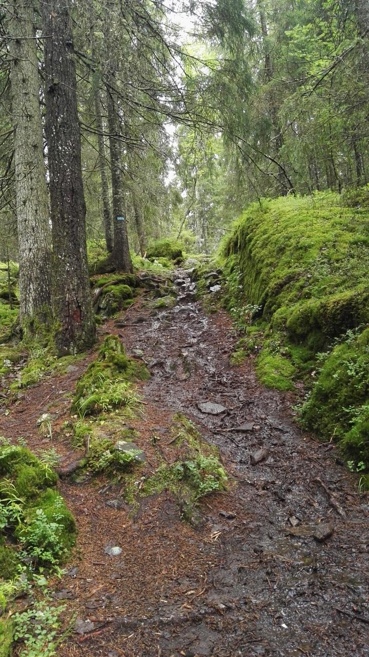 Røyrivannskoia til Lutkjern