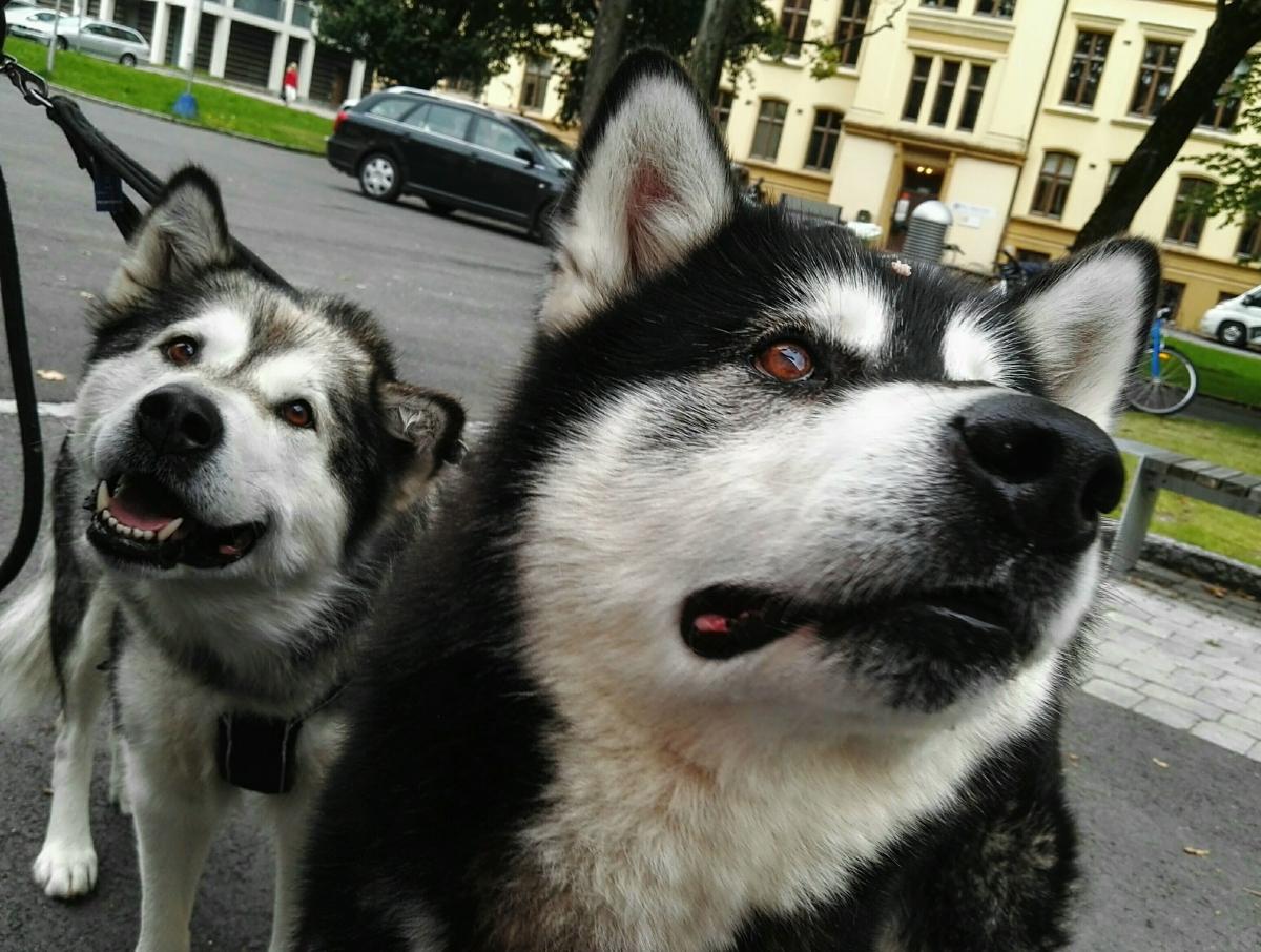 Hund for Friluftsliv ?