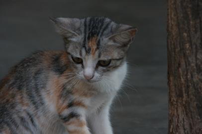 en katt i landsbyen ved TICC