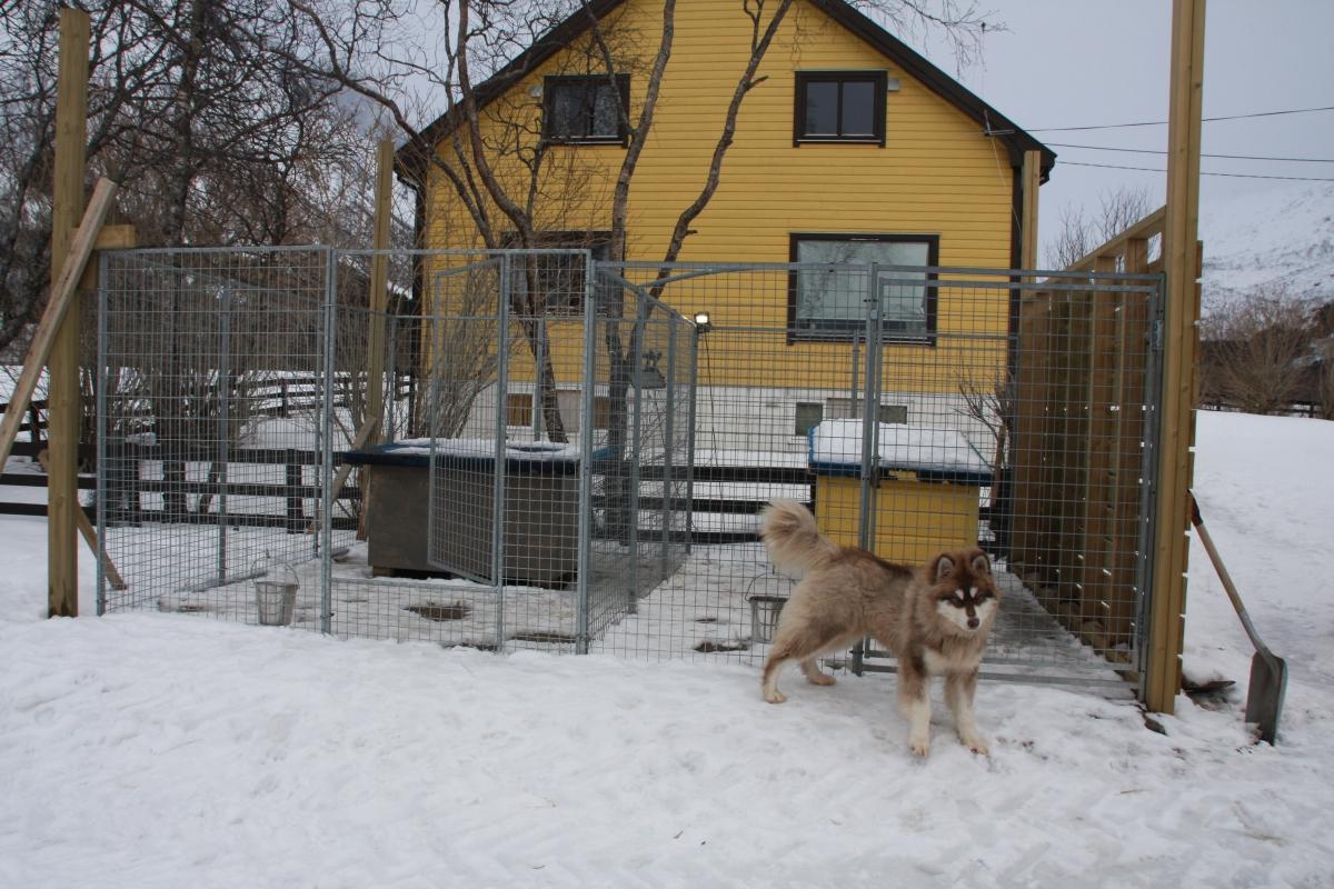 Hundene som bor ute