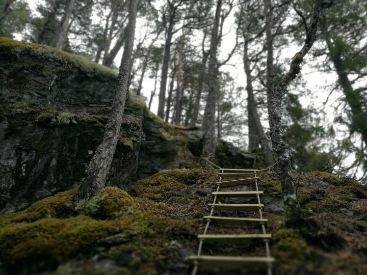 Trollskog og utsikt påHøgkammen